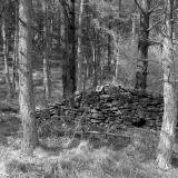 Pickering Moor, Wheeldale