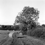 Wrelton Cliff