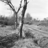 Peat Road, Stape
